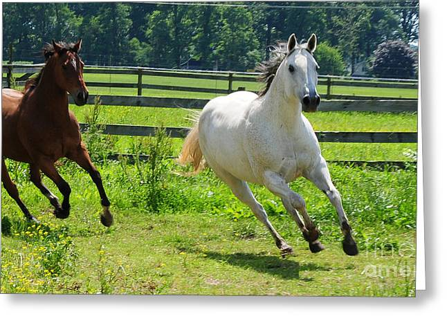 Two Horses Greeting Cards - Running Wild Greeting Card by Paul Ward