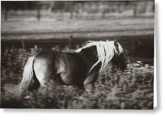 Breeds Greeting Cards - Running Wild Greeting Card by Wim Lanclus