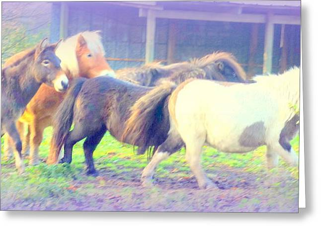 Jackass Foal Greeting Cards - Running With My Friends Greeting Card by Hilde Widerberg