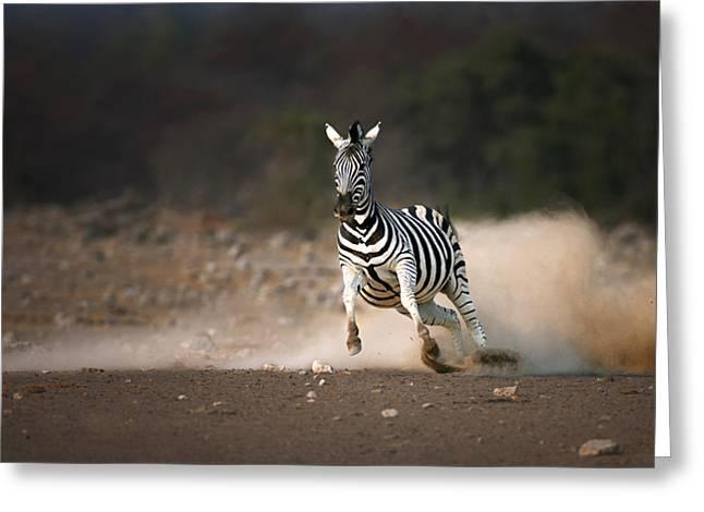 Running Zebra Greeting Card by Johan Swanepoel