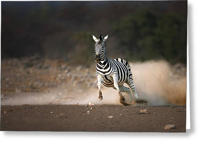 Equus Greeting Cards - Running Zebra Greeting Card by Johan Swanepoel