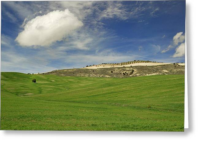 Spain Greeting Cards - Rural beauty at Andalusia Greeting Card by Guido Montanes Castillo