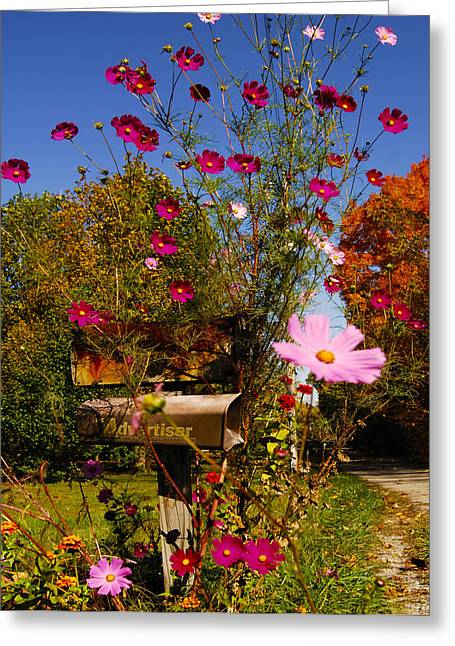 Free Flower Delivery Greeting Cards - Rural Free Delivery Advantage Of Country Living Greeting Card by Randall Branham