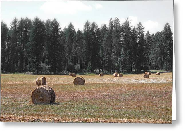 Farmers Field Greeting Cards - Rural Harvest Greeting Card by Daniel Hagerman