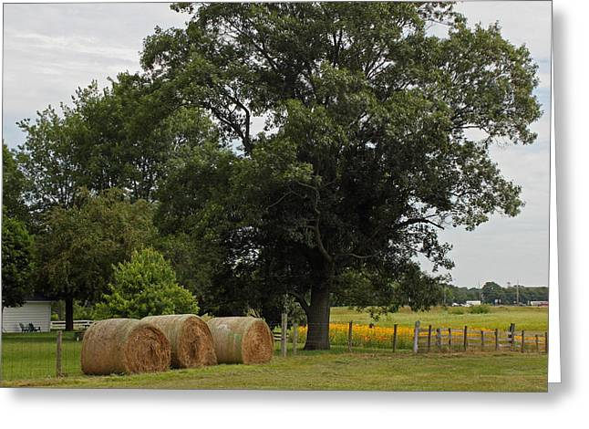 Hay Bales Greeting Cards - Rural Indiana Scenic - Carroll County Greeting Card by Suzanne Gaff