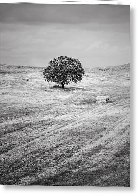 Field. Cloud Greeting Cards - Rural Landscape 3 Greeting Card by Antonio Jorge Nunes