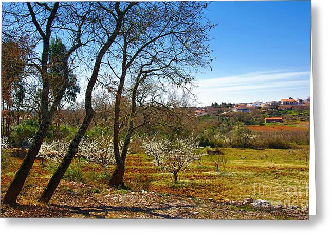 Almonds Greeting Cards - Rural Landscape Greeting Card by Carlos Caetano