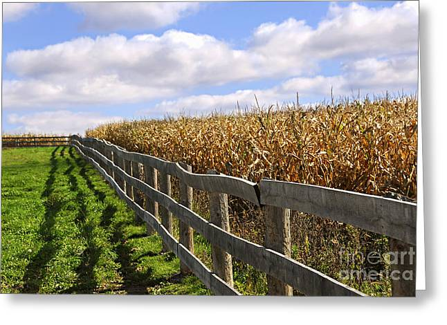 Green Grass Blue Sky Greeting Cards - Rural landscape with fence Greeting Card by Elena Elisseeva