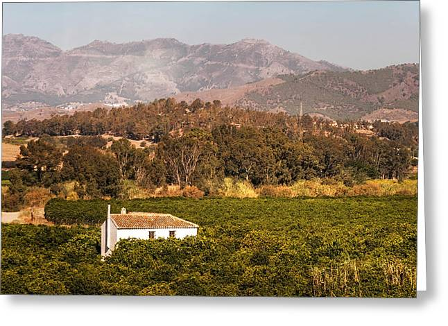 Vineyard Art Greeting Cards - Rural Part of Andalusia. Spain Greeting Card by Jenny Rainbow