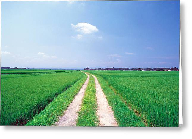 Peaceful Scene Photographs Greeting Cards - Rural Road Between Crop Fields Greeting Card by Panoramic Images