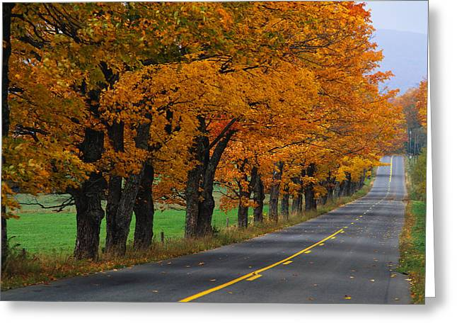 Tree Lines Greeting Cards - Rural Road In Autumn Greeting Card by Panoramic Images
