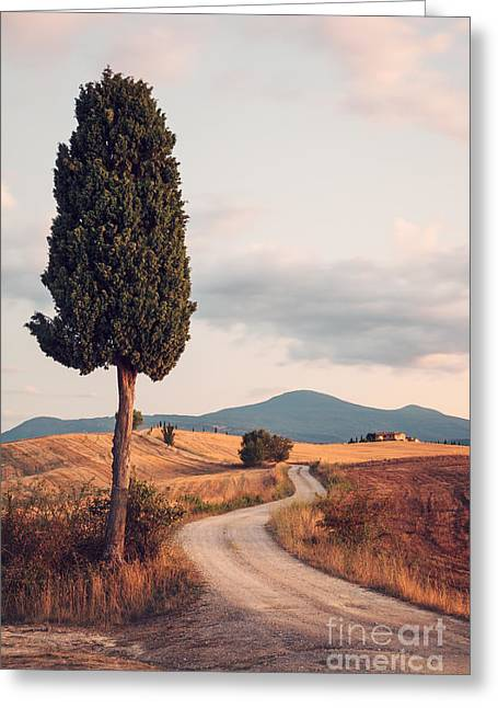 Colombos Greeting Cards - Rural road with cypress tree in Tuscany Italy Greeting Card by Matteo Colombo