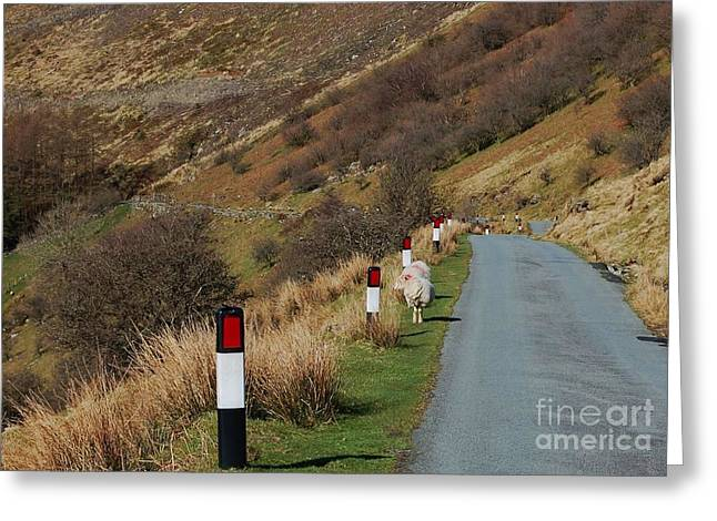 Wales Greeting Cards Greeting Cards - Rural Scene In Wales Greeting Card by Courtney Dagan