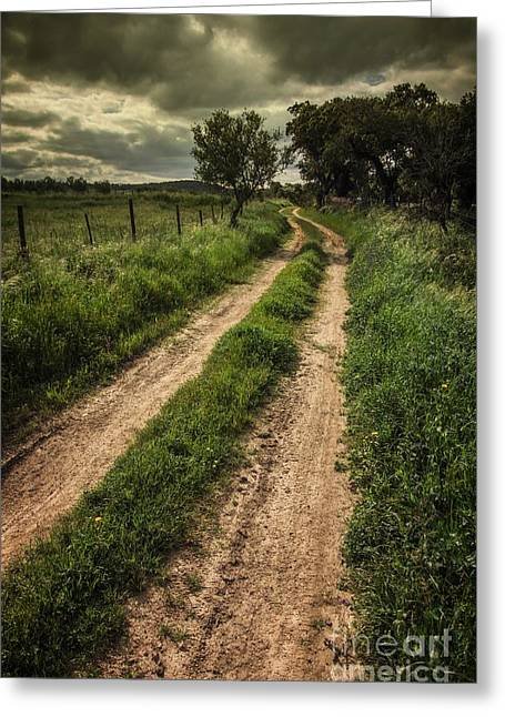 Hike Greeting Cards - Rural Trail Greeting Card by Carlos Caetano