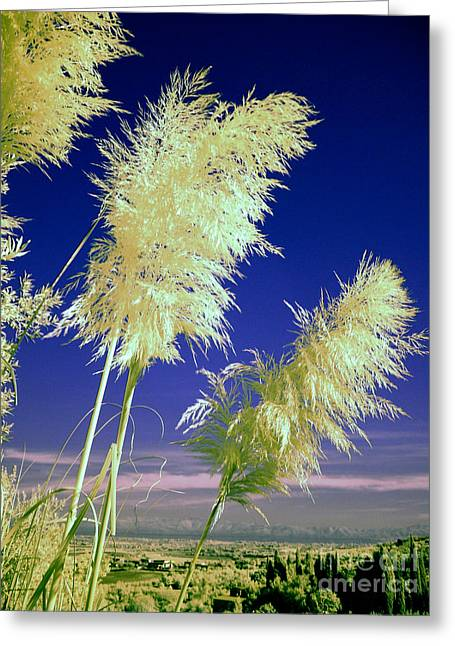 Red Photographs Greeting Cards - Rushes Greeting Card by Tim Holt