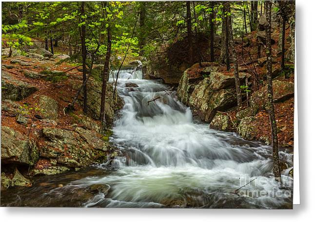 Spring In Maine Greeting Cards - Rushing Stream in Acadia Greeting Card by Susan Cole Kelly