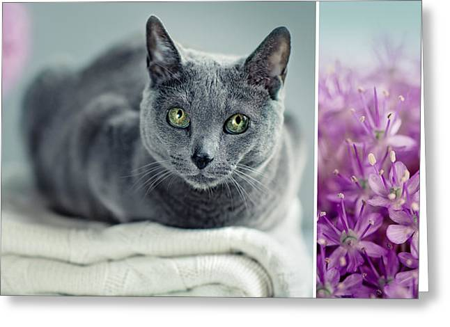 Bred Photographs Greeting Cards - Russian Blue Collage Greeting Card by Nailia Schwarz