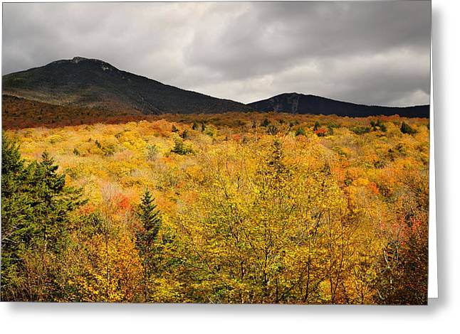 Foliage In White Mountains Greeting Cards - Rustic Autumn at Franconia Notch Greeting Card by Luke Moore