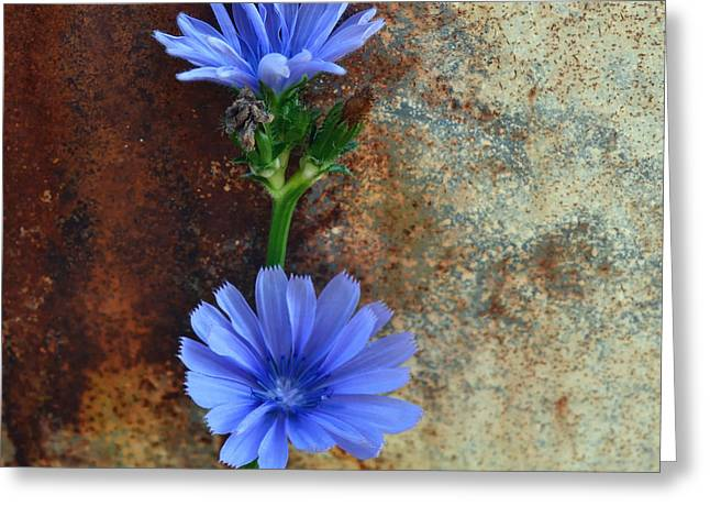 Corner Kitchen Greeting Cards - Rustic Bloom Greeting Card by Tom Druin