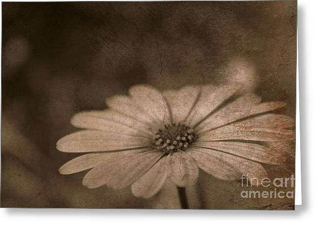 Slimline Greeting Cards - Rustic Daisy Greeting Card by Clare Bevan