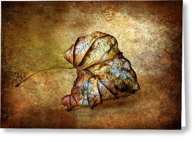 Remnant Greeting Cards - Rustic Greeting Card by Jessica Jenney