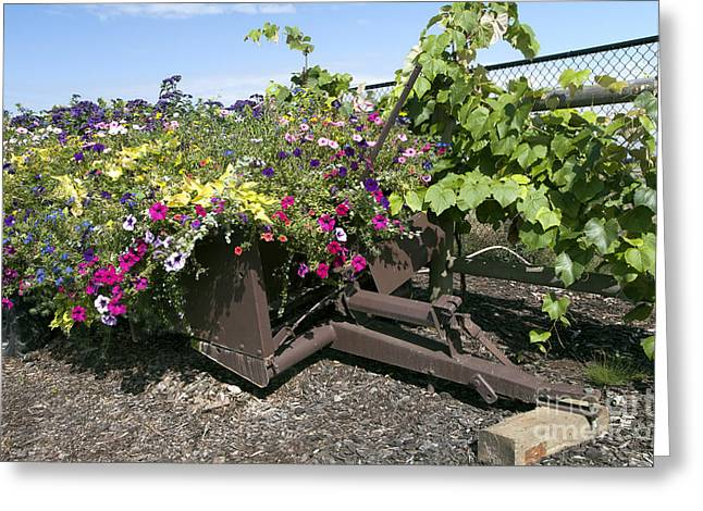 Sauvie Island Greeting Cards - Rustic Planter Greeting Card by Peter French