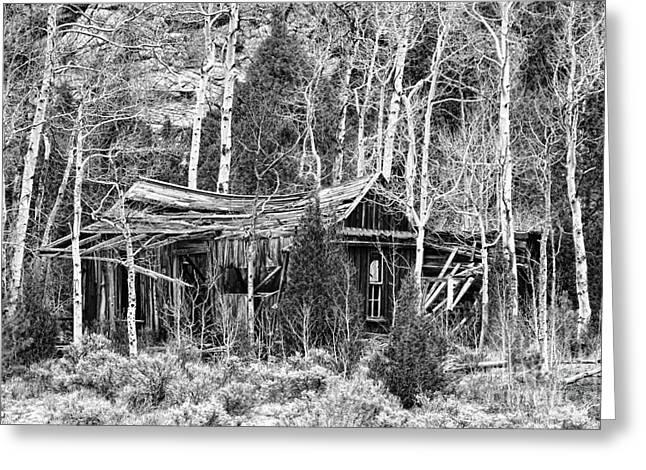 Mountain Cabin Greeting Cards - Rustic Rundown Rocky Mountain Cabin BW Greeting Card by James BO  Insogna