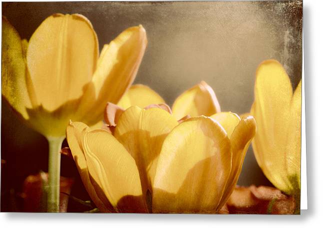 Vintage Tulip Greeting Cards - Rustic Tulips Greeting Card by Sharon Lisa Clarke