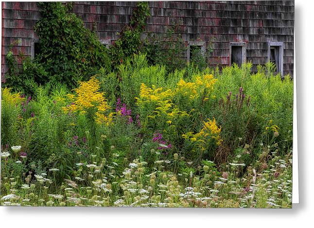 Old Barns Greeting Cards - Rustic Wildflowers Greeting Card by Bill  Wakeley