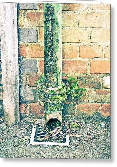Rusty Drainpipe Greeting Card by Tom Gowanlock