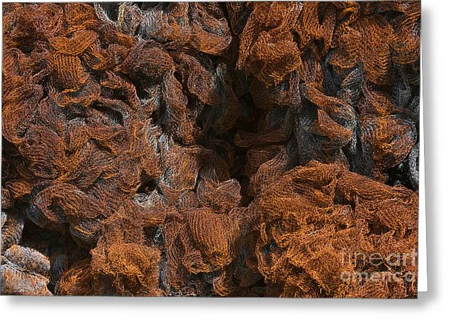 Industrial Concept Greeting Cards - Rusty Metal Net Texture Greeting Card by Kiril Stanchev