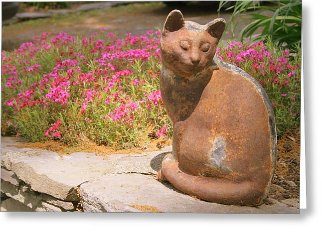 Photos Of Cats Greeting Cards - Rusty the Cat Greeting Card by Susan Moore