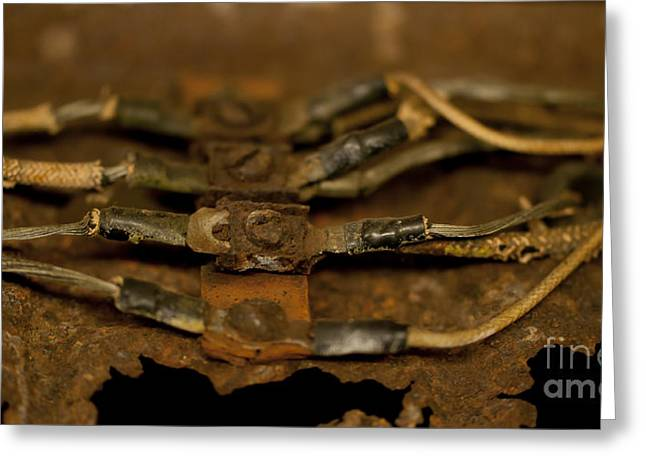 Fraying Greeting Cards - Rusty Wires Greeting Card by Wilma  Birdwell