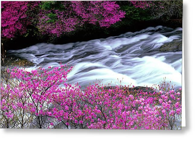 Riverbed Greeting Cards - Ryuzu Falls Tochigi Japan Greeting Card by Panoramic Images