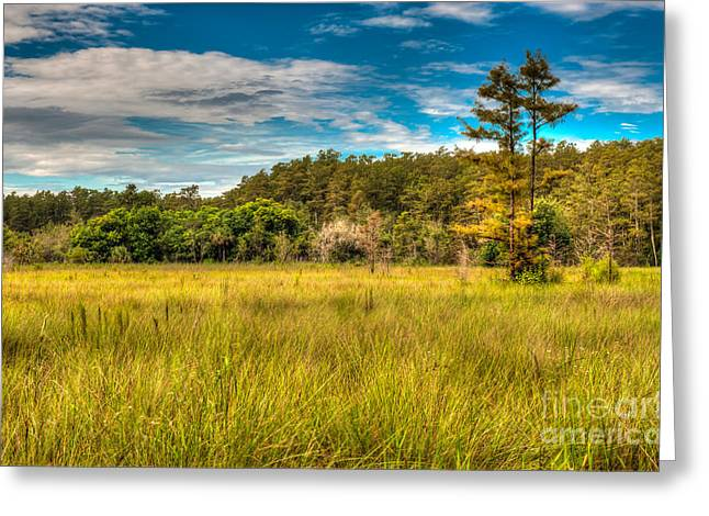 Hdr Landscape Greeting Cards - Sawgrass  Marsh Greeting Card by Charles Dobbs