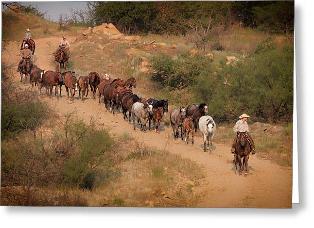 Quarter Horses Greeting Cards - S Curve Greeting Card by Kelli Brown