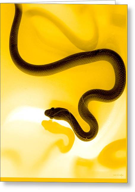 Yellow Greeting Cards - S Greeting Card by Holly Kempe