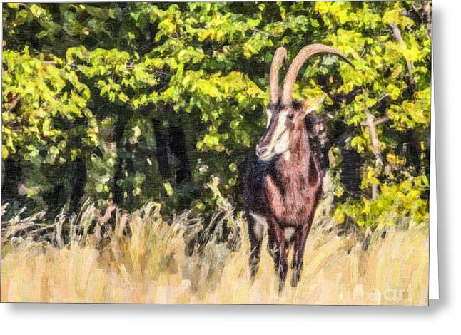 Africa Greeting Cards - Sable Antelope Greeting Card by Liz Leyden
