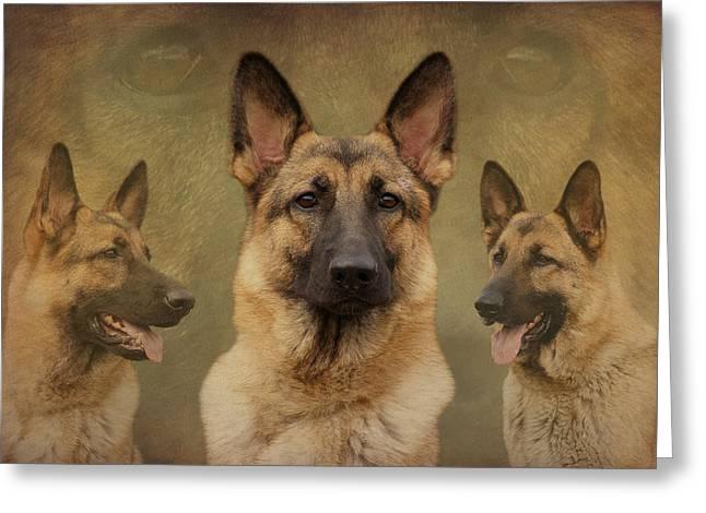 Indiana Art Greeting Cards - Sable German Shepherd Collage Greeting Card by Sandy Keeton