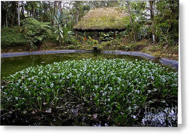 Thatch Greeting Cards - Sachatamia Lodge Pond In Mindo Ecuador Greeting Card by Al Bourassa
