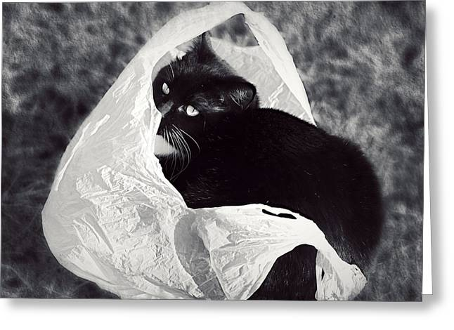 Melanie Lankford Photography Greeting Cards - Sack Ninja Greeting Card by Melanie Lankford Photography