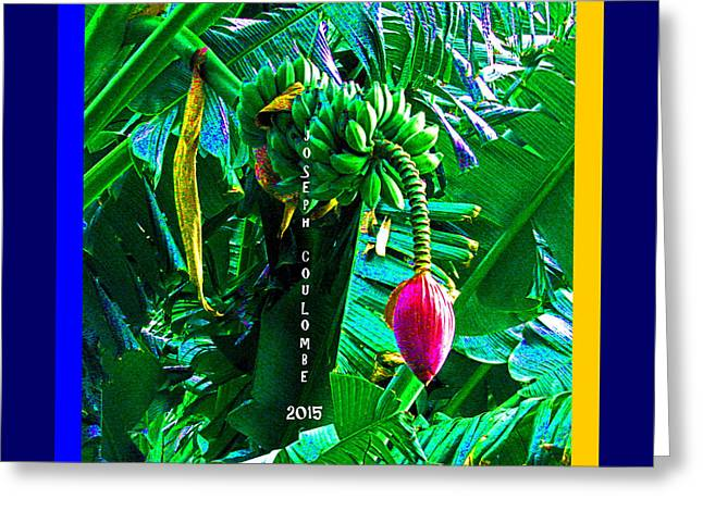 Pirates Greeting Cards - Sacramento Delta Banana Greeting Card by Joseph Coulombe