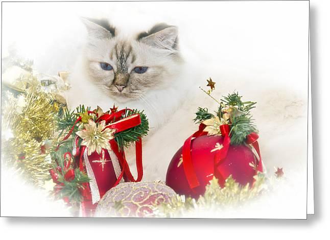 Sacred Cat Of Burma Christmas Time II Greeting Card by Melanie Viola