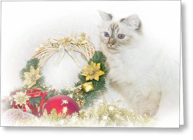 Sacred Cat Of Burma Christmas Time Greeting Card by Melanie Viola