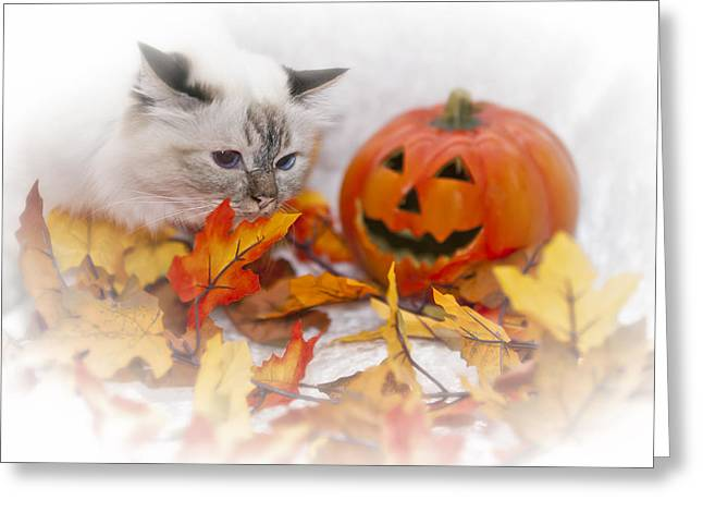 Sacred Cat Of Burma Halloween Greeting Card by Melanie Viola