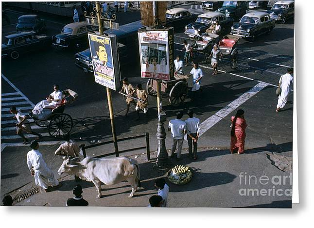 Holy Cow Greeting Cards - Sacred Cow In Kolkata Calcutta Greeting Card by Van D. Bucher