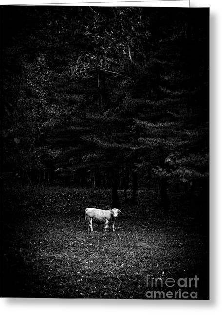 Sacred Photographs Greeting Cards - Sacred Cow Open Edition Greeting Card by Edward Fielding