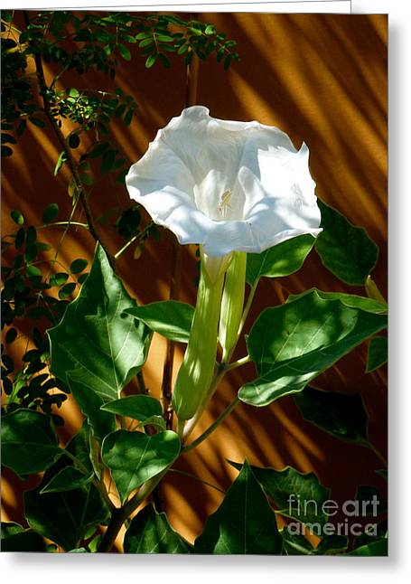 Sacred Datura Greeting Card by L T Sparrow