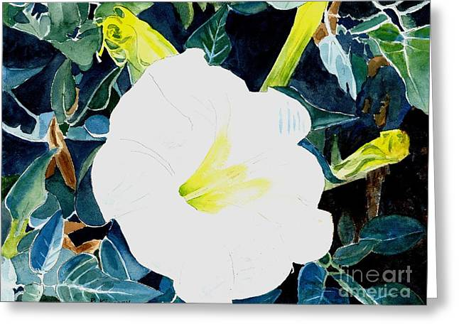 Jimson Weed Greeting Cards - Sacred Datura - W. Jimson Weed Greeting Card by Ralph Kingery