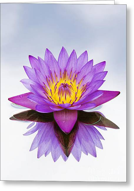 Sacred Indian Blue Lotus Flower Greeting Card by Tim Gainey